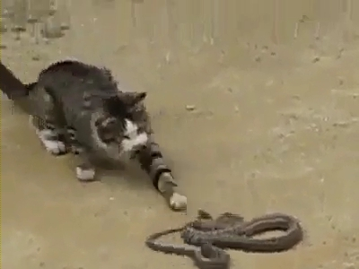 Cat and snake